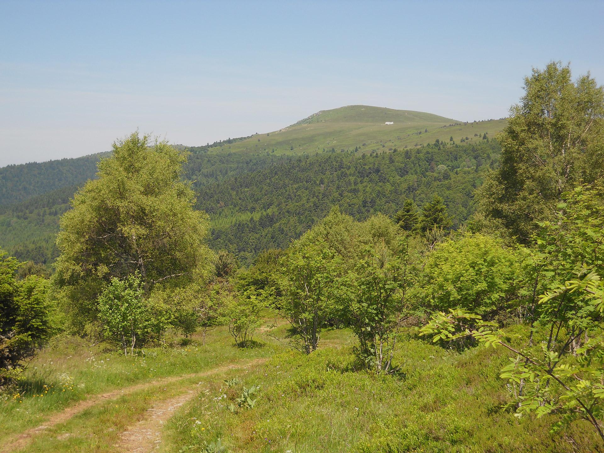praboure-parc-activite-montagne-balades-en-trottinette-electrique-5