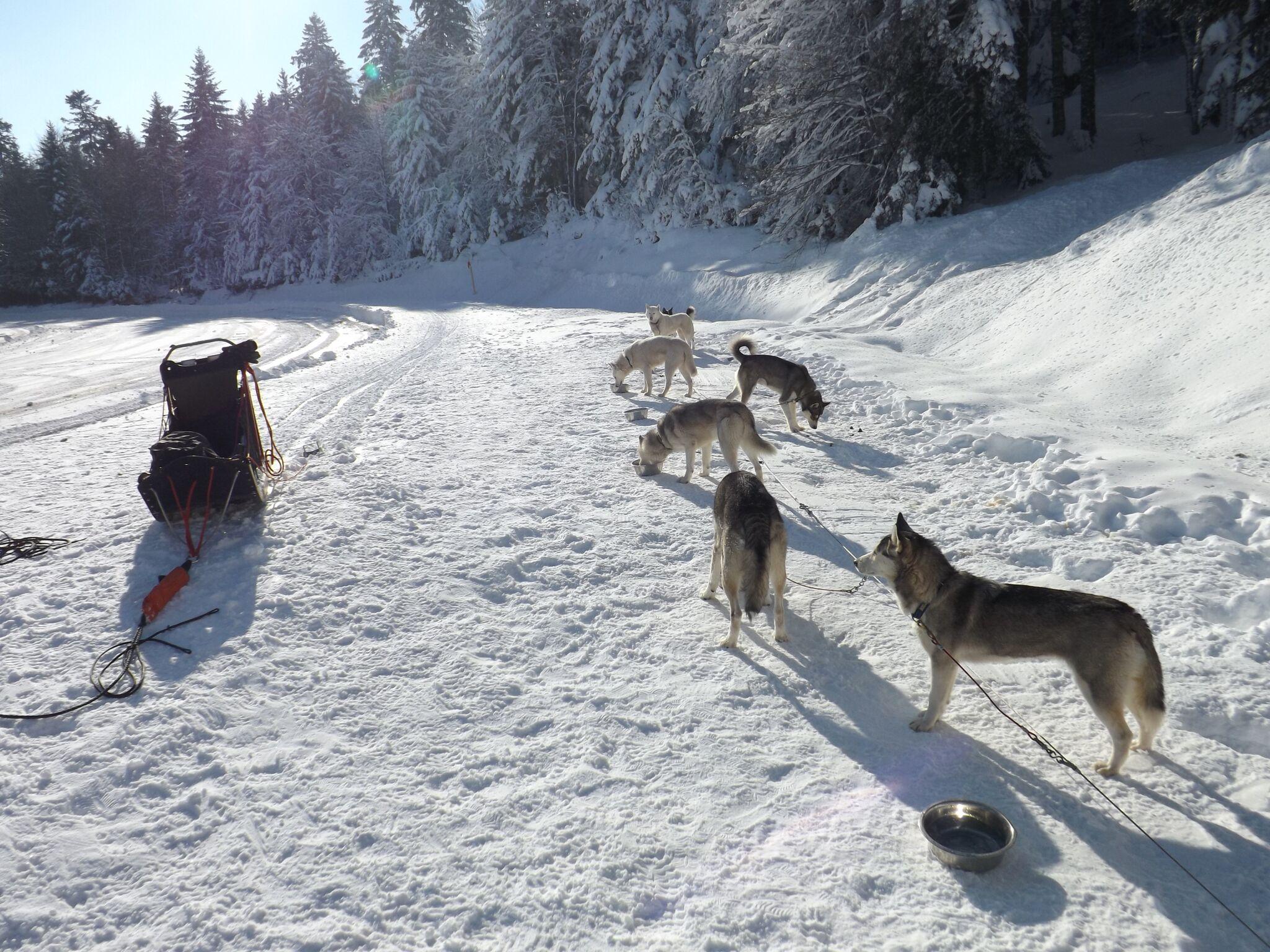 praboure-station-de-ski-hiver-chiens-de-traineau-2