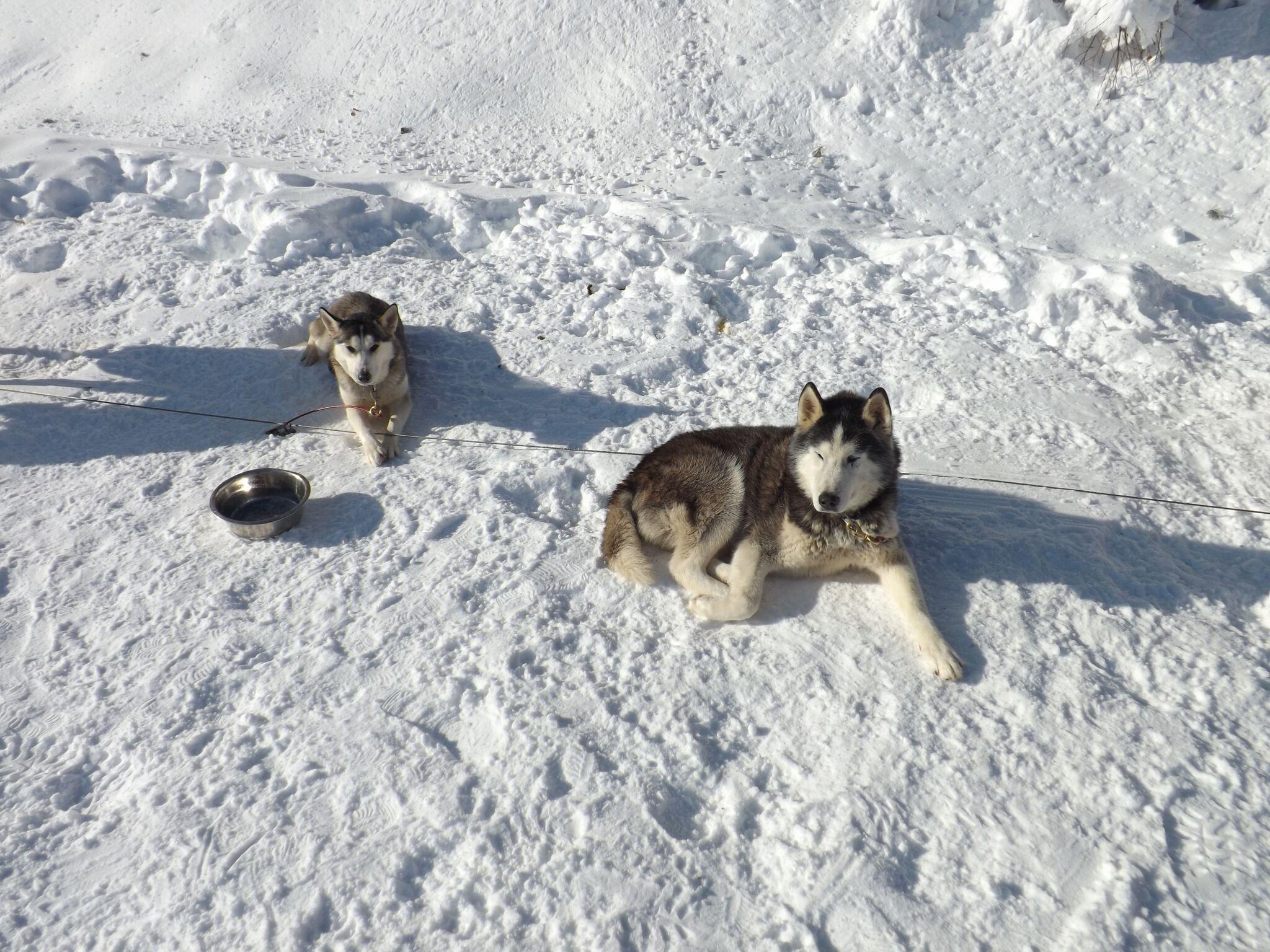 praboure-station-de-ski-hiver-chiens-de-traineau-3