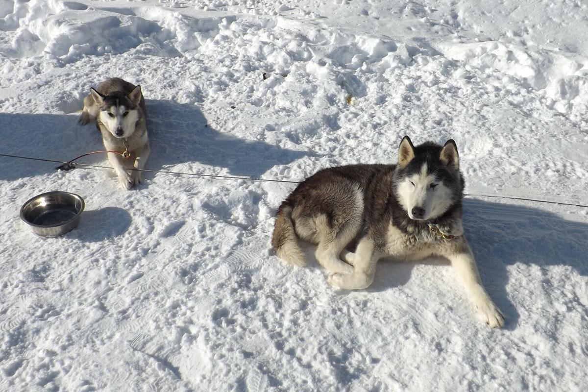 praboure-station-de-ski-hiver-chiens-de-traineau
